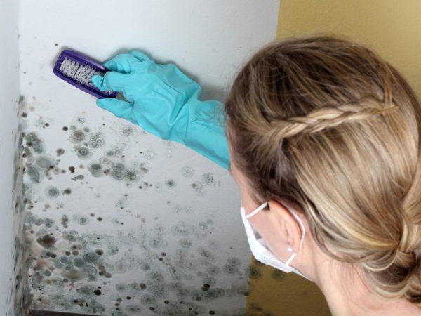 Очистка стены от грибка жёсткой щеткой