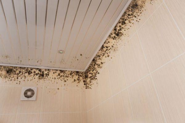 Грибок на потолке в ванной комнате