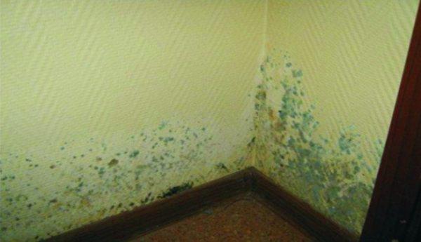 Голубая плесень на стене