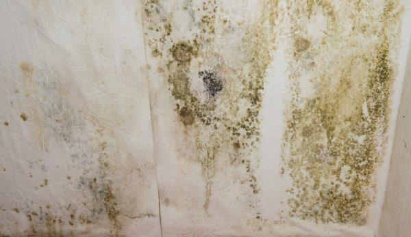 Зелёная плесень на стенах