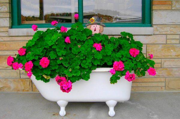 Цветник из старой ванны