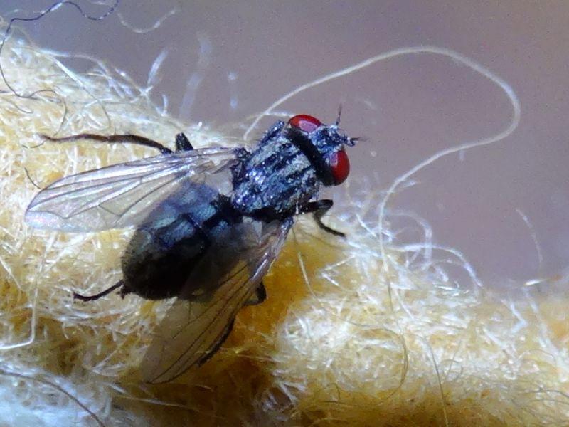Как сделать ловушку для мух из бутылки