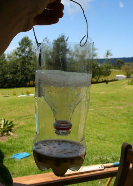 ловушка для мух из бутылки