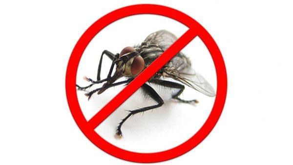 значок перечеркнутая муха