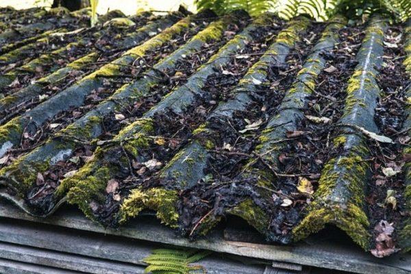Крыша под опавшей листвой