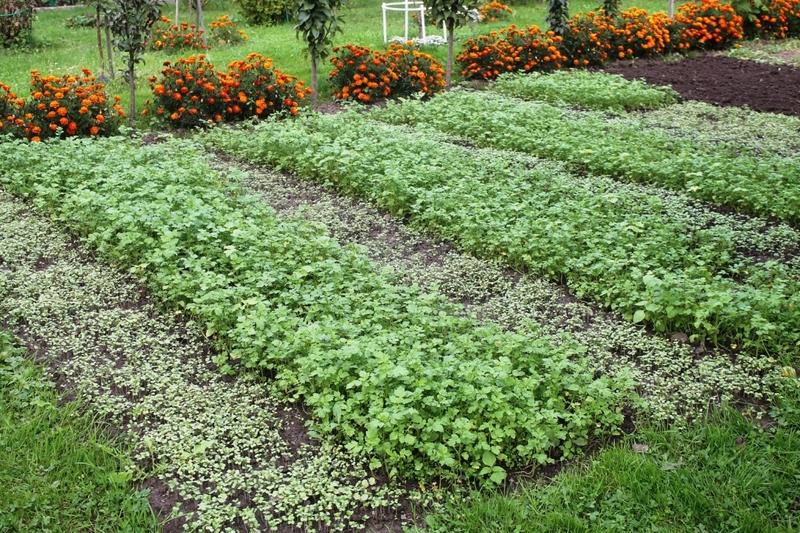 Какие растения и цветы сажают осенью на даче и в саду?