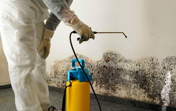 Обработка стены от плесени с помощью опрыскивателя