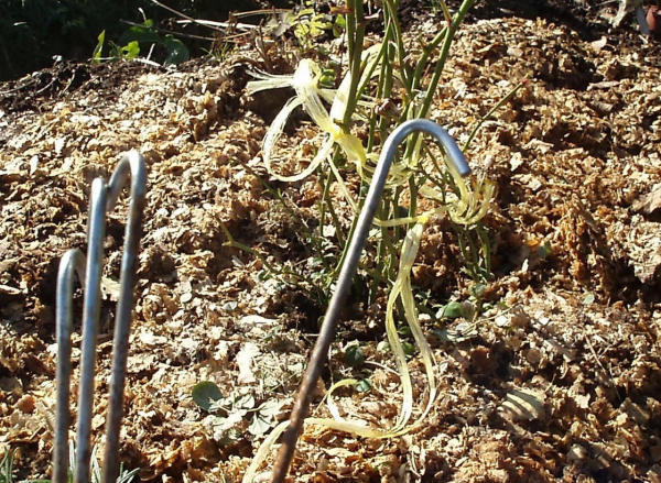 Крюки для пригибания роз