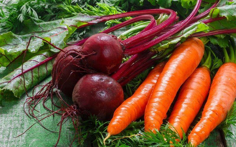 Типичные ошибки при уборке свёклы и моркови, а также при закладке их на хранение