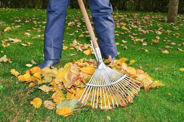 Уборка листвы с газона