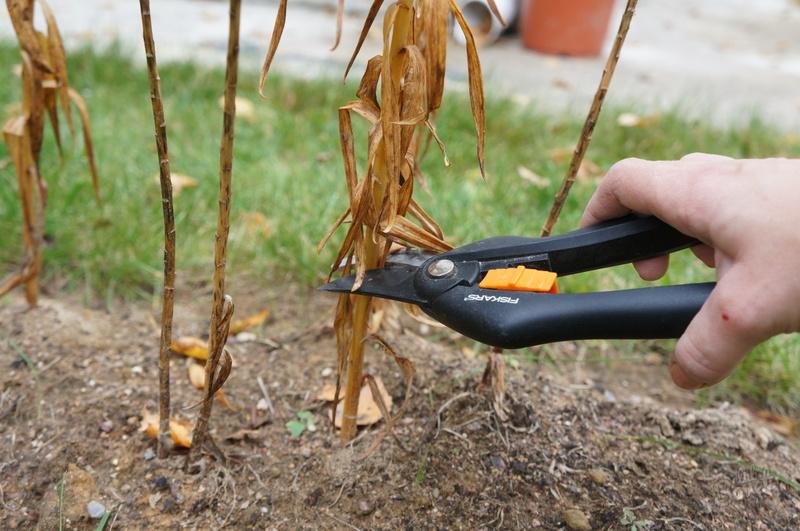 Пересадка лилий осенью: как разделить луковицы, сделать лунки и посадить на новом месте