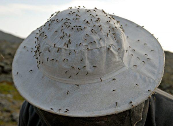 Атака комаров