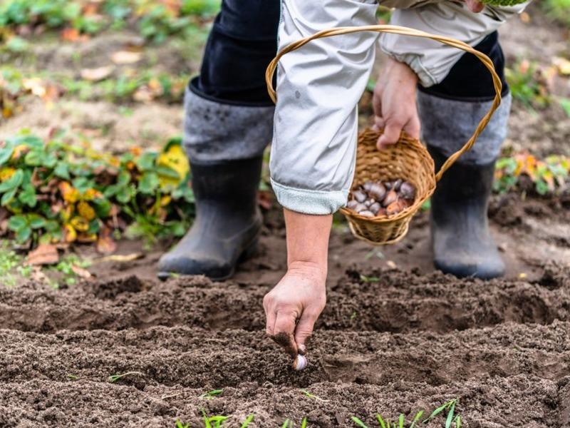 Перезимуем: какие овощные, цветущие культуры, а также ягодные кустарники можно посадить под зиму