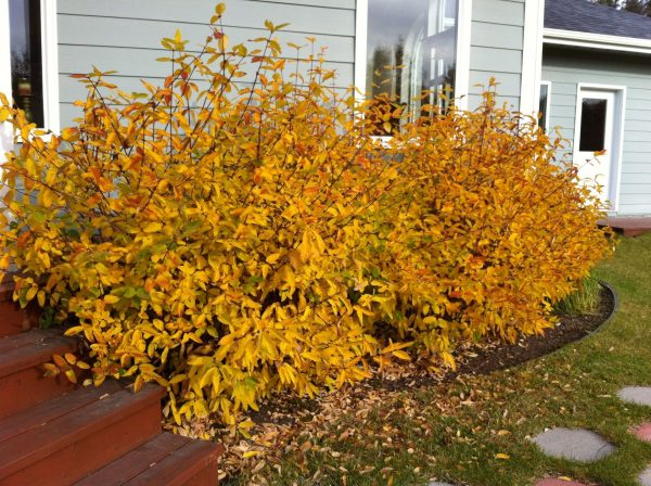 Осень — время сажать жимолость - Интерьер