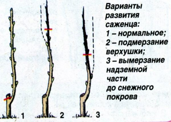 Перевод центрального проводника на боковой побег