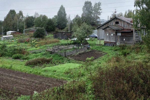 Пасмурный день в огороде