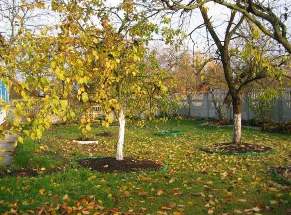 Золотая осень в огороде
