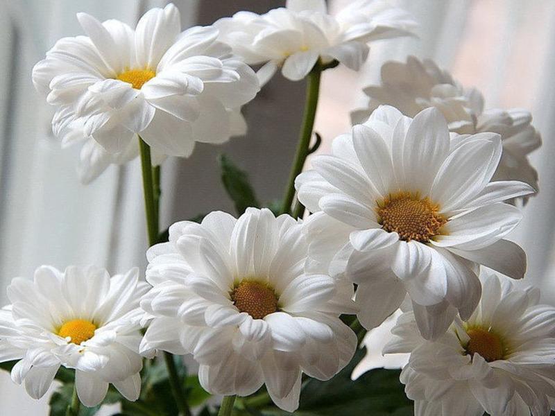 Растения, которые мы постоянно называем чужим именем