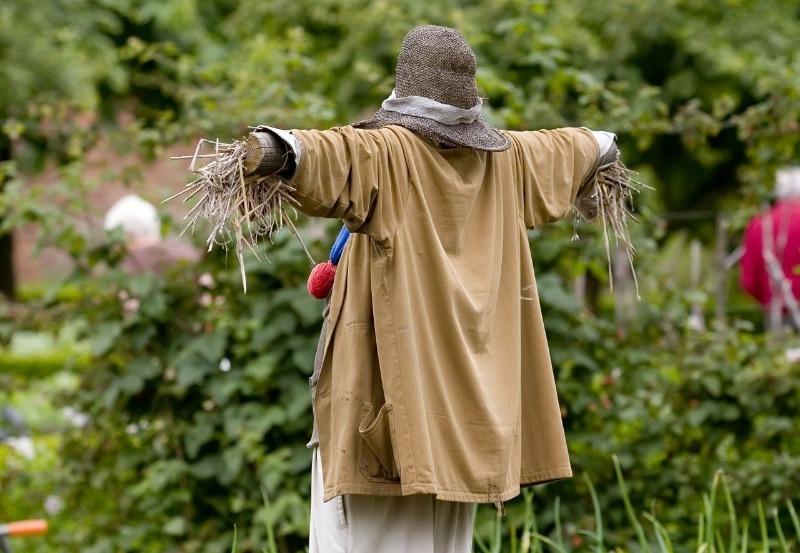 Вороны свили гнездо на вашем участке: как прогнать пернатых захватчиков