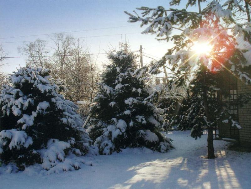 Елки зеленые: 6 доводов в пользу хвойных деревьев на загородном участке