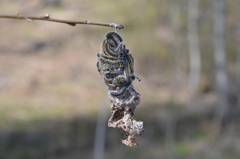 «Зимние убежища» вредителей: как найти на участке гнезда паразитов - Интерьер