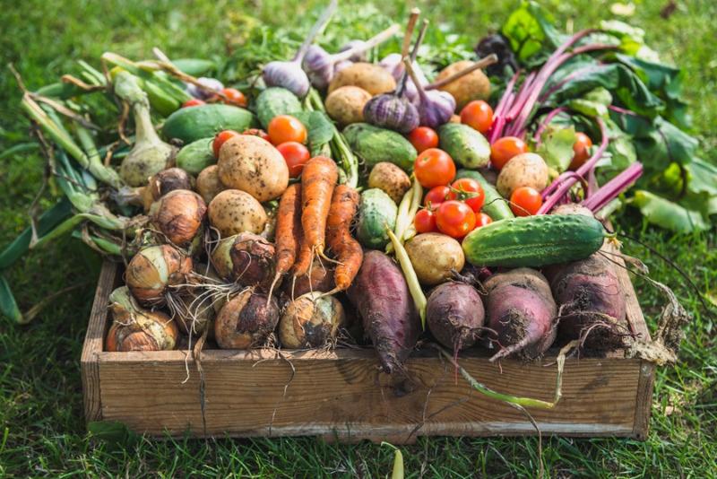Проверенные способы сохранить урожай до самой весны