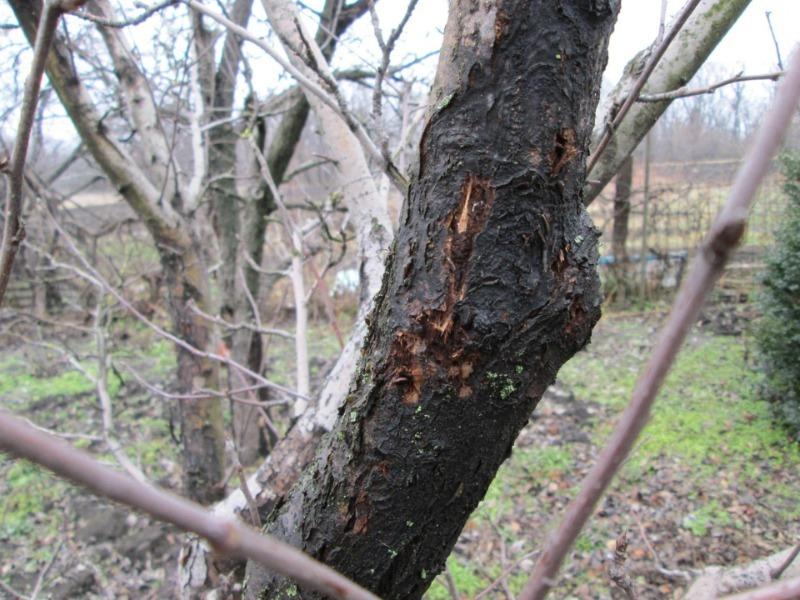 «Зимние убежища» вредителей: как найти на участке гнезда паразитов