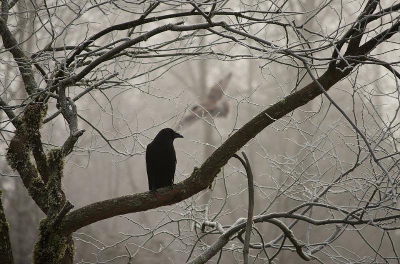 Незваные гости: какие животные могут наведываться на дачу с наступлением холодов и как их отвадить