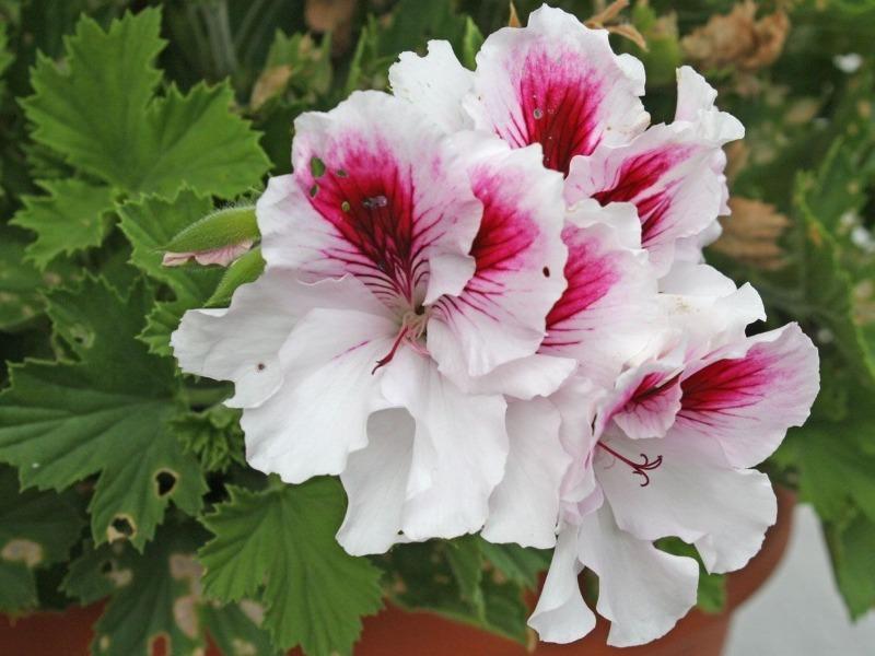 10 медленнорастущих цветов, которые можно посеять на рассаду уже в декабре