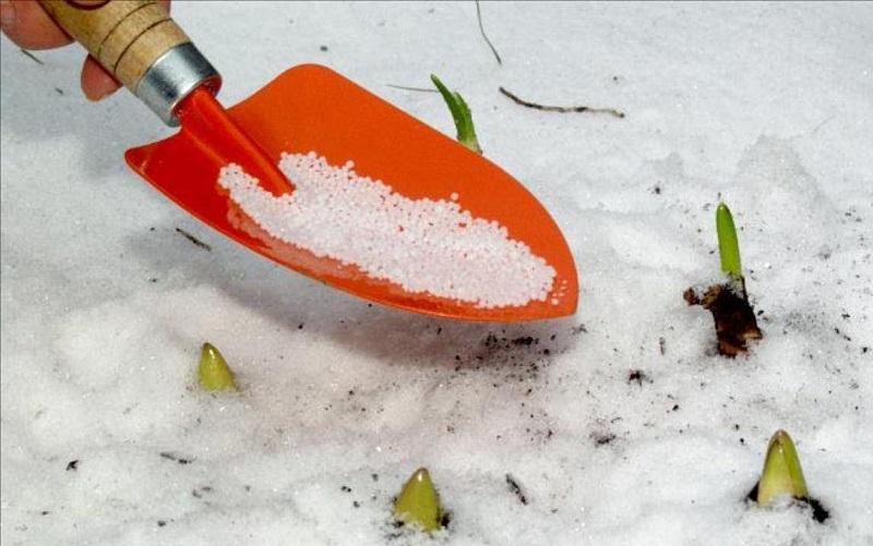 Можно ли подкармливать сад и огород по снегу: 3 удобрения, которые пригодятся зимой