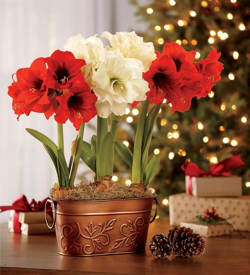 6 ярких растений с шикарным цветением, которые прогонят зимнюю хандру