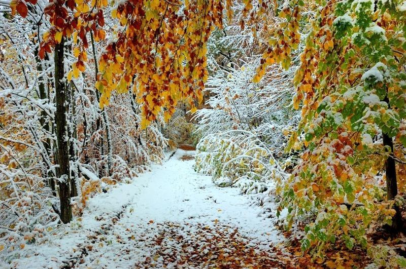 Почему зима пришла, а дерево в саду не сбросило всю листву