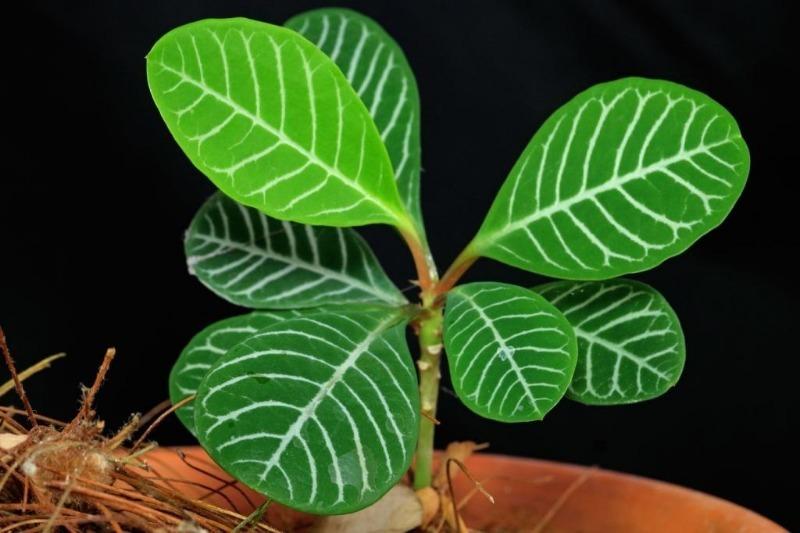 10 комнатных растений, которые лучше не дарить на Новый год, чтобы не навредить