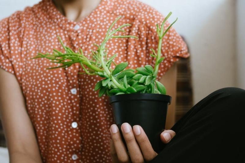 Народная мудрость: почему нельзя брать чужое растение в свой дом