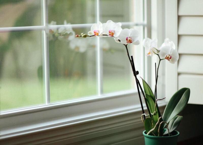 5 ценных советов, благодаря которым ваша орхидея станет еще красивее и изящнее, чем прежде