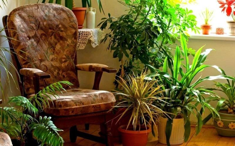7 причин держать дома как можно больше комнатных растений