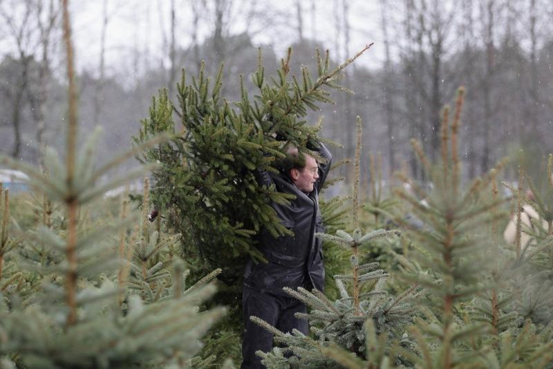 Почему я не выбрасываю елку после Новогодних праздников: лайфхаки от закоренелого дачника