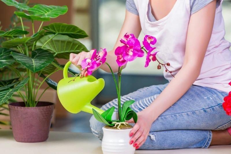 7 ошибок в уходе за комнатными растениями зимой, которые могут привести к их гибели