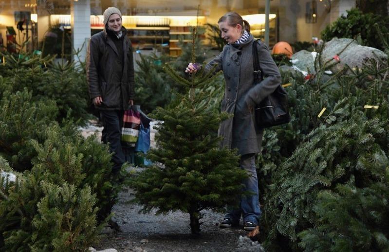 6 маленьких хитростей, как выбрать живую елку, чтобы она не осыпалась до Рождества