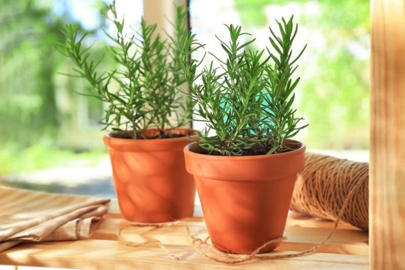 Цветы жизни: 5 комнатных растений, которые улучшают самочувствие и способствуют долголетию
