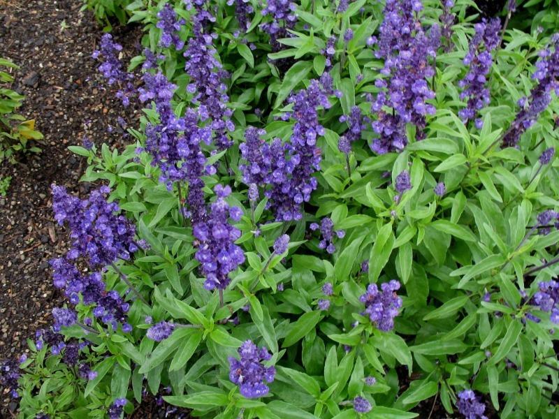 6 запрещенных растений на участке, за которые могут выписать реальный штраф и даже посадить в тюрьму