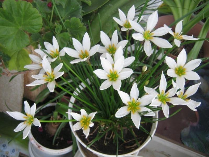 Домашняя оранжерея: 7 изумительных комнатных растений, которые цветут зимой