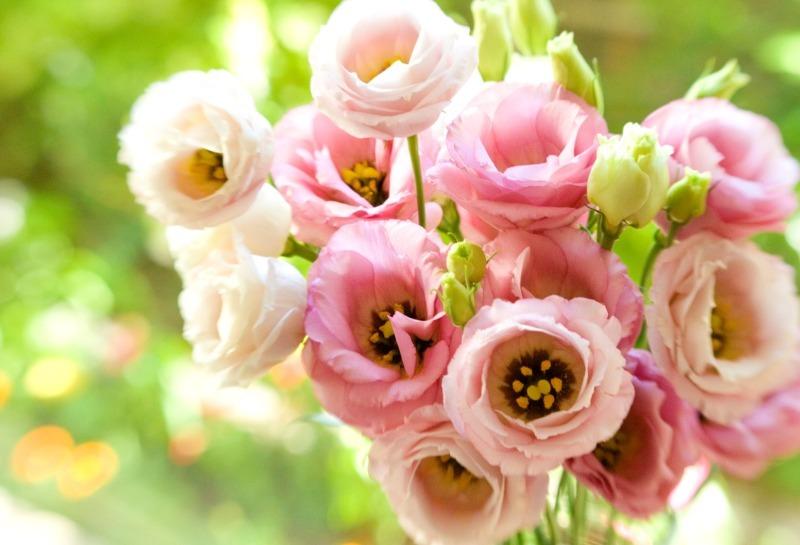 10 необычайно красивых растений, которые превратят ваш сад в оранжерею