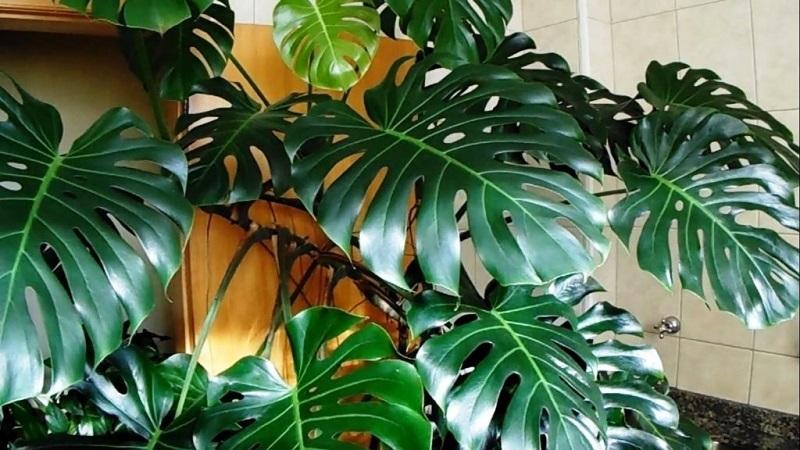 8 растений, которые по приметам могут поссорить мужа с женой