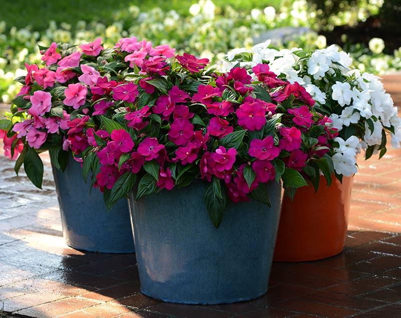 7 растений-оберегов, которые защитят семью от негатива и злых людей