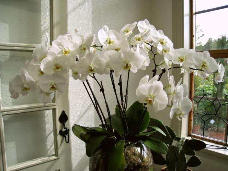 7 мест в доме, куда не стоит ставить вашу орхидею зимой, иначе она может погибнуть