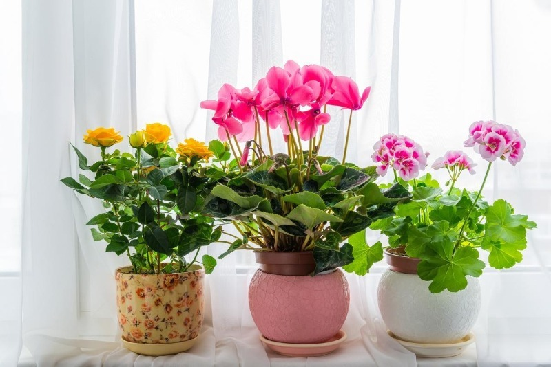 9 маленьких хитростей по уходу за цветами, которые помогут вам избежать больших проблем