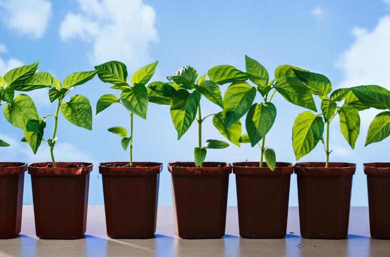 8 лучших стимуляторов роста для семян, которые помогут вырастить крепкую рассаду