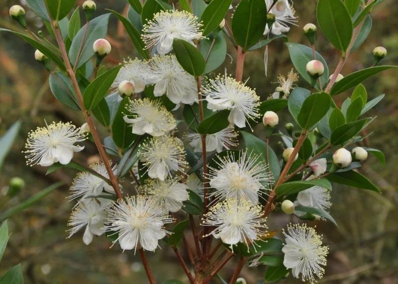 8 удивительных растений, которые притягивают в семью счастье и любовь