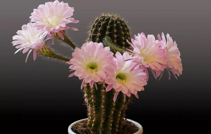 7 комнатных растений, которые цветут только к большим деньгам
